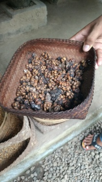 kopi luwak, luwak coffee, poop coffee, most expensive coffee in the world, bali, bali tourism